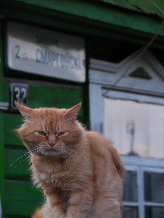 rudy_kot_zły