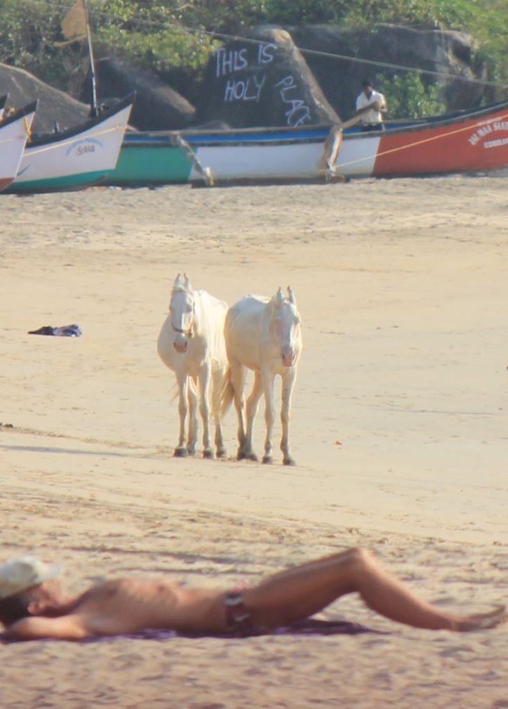 białe_konie_plaża