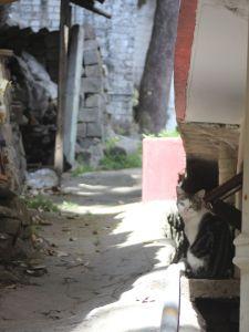 kot_czarno_biały_łaciaty