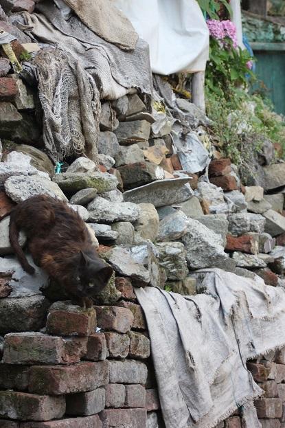 czarny_kot_biały_pies_dharamsala_indie