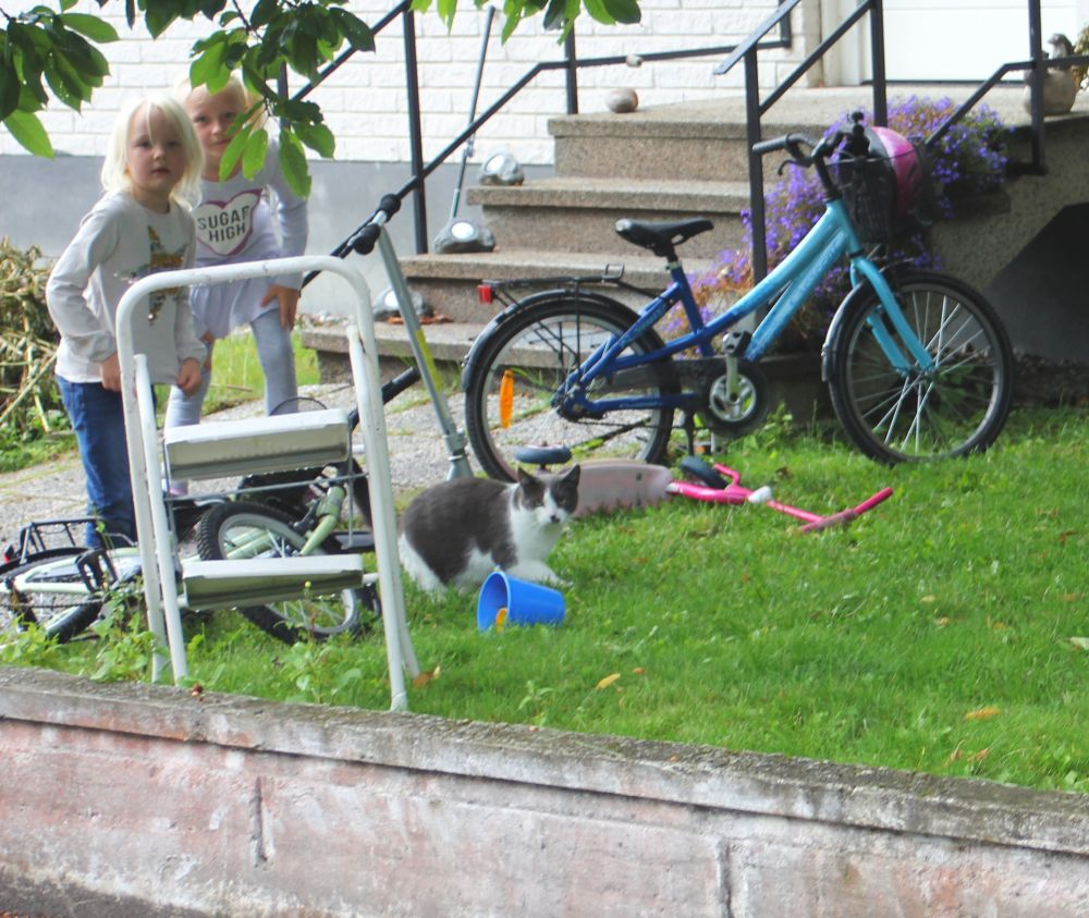 bolsta_szwecja_kot_dzieci_rower