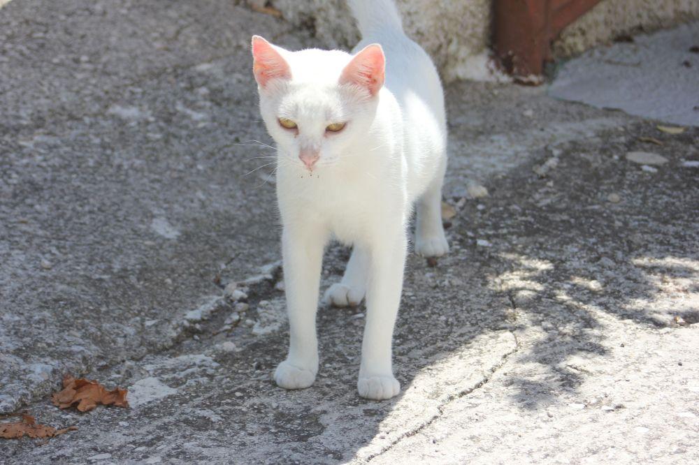 biały_kot_zmróż_oczy_mróży_różowy