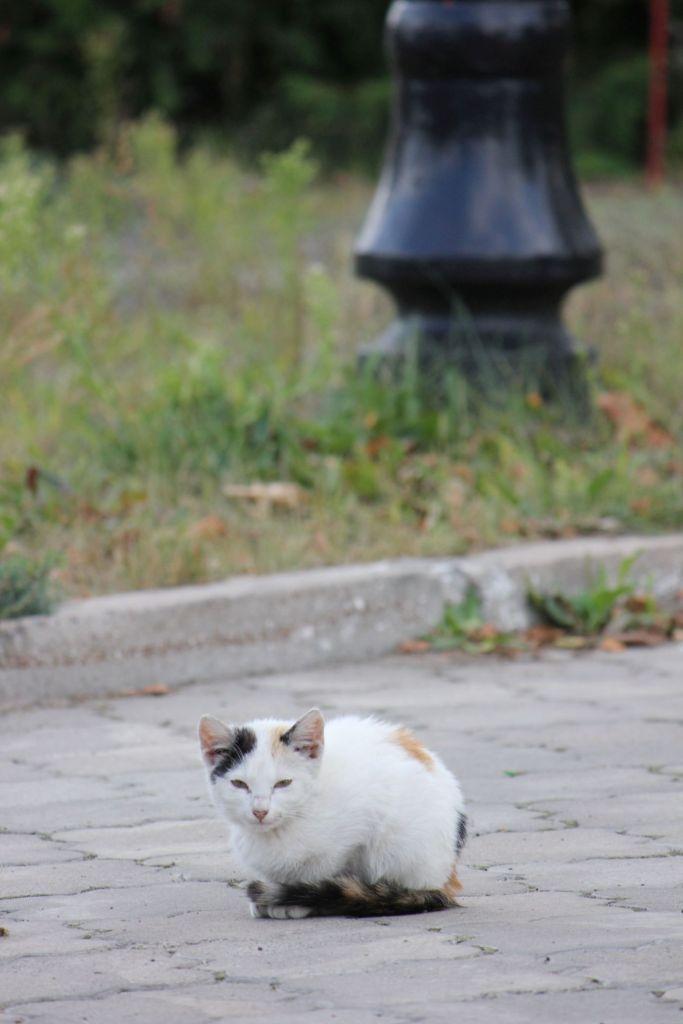 biały_kot_straż_pożarna