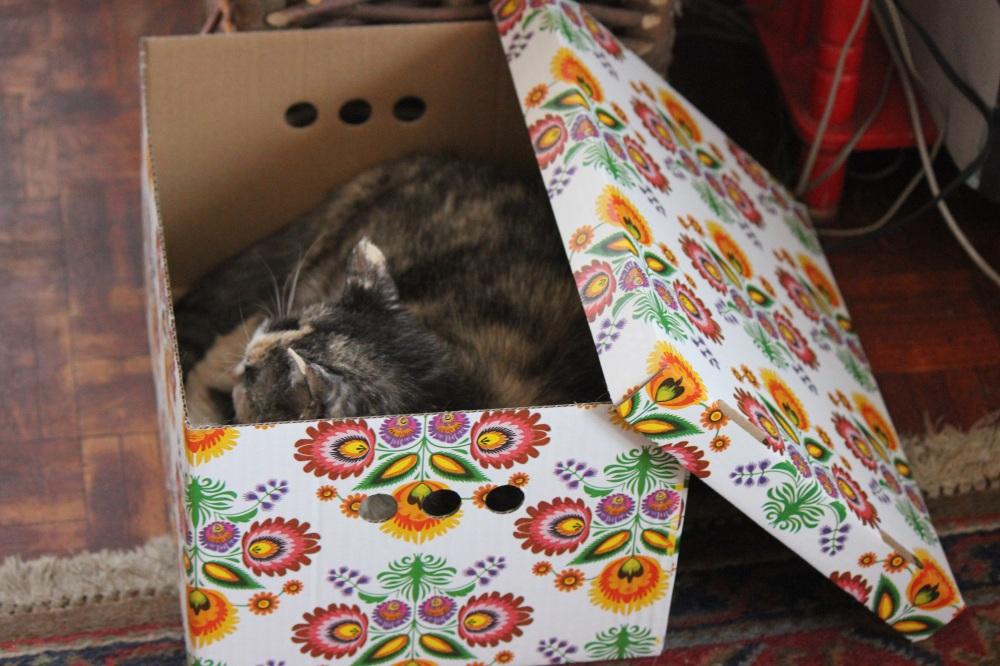 cat_in_The_box_Kot_w_pudełku_szylkret