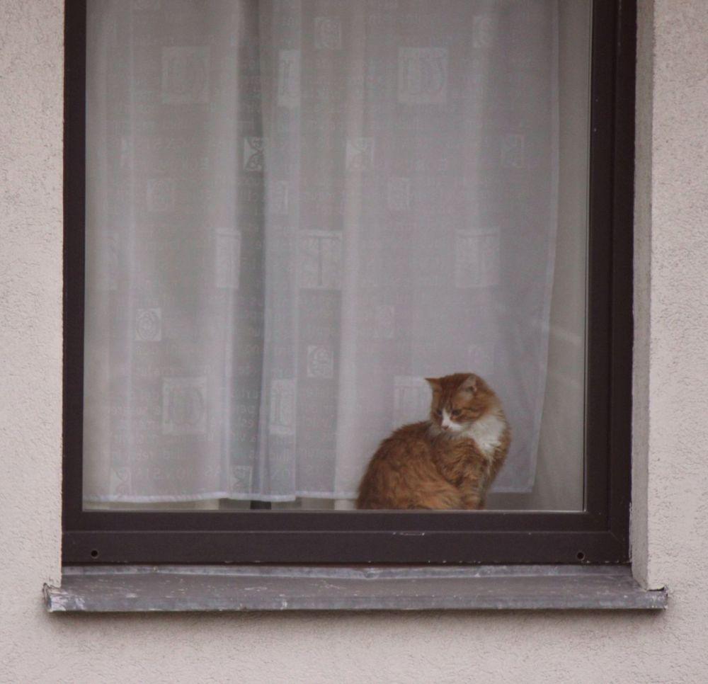 kot_okno_rudy_multi_hekk_Piaseczno