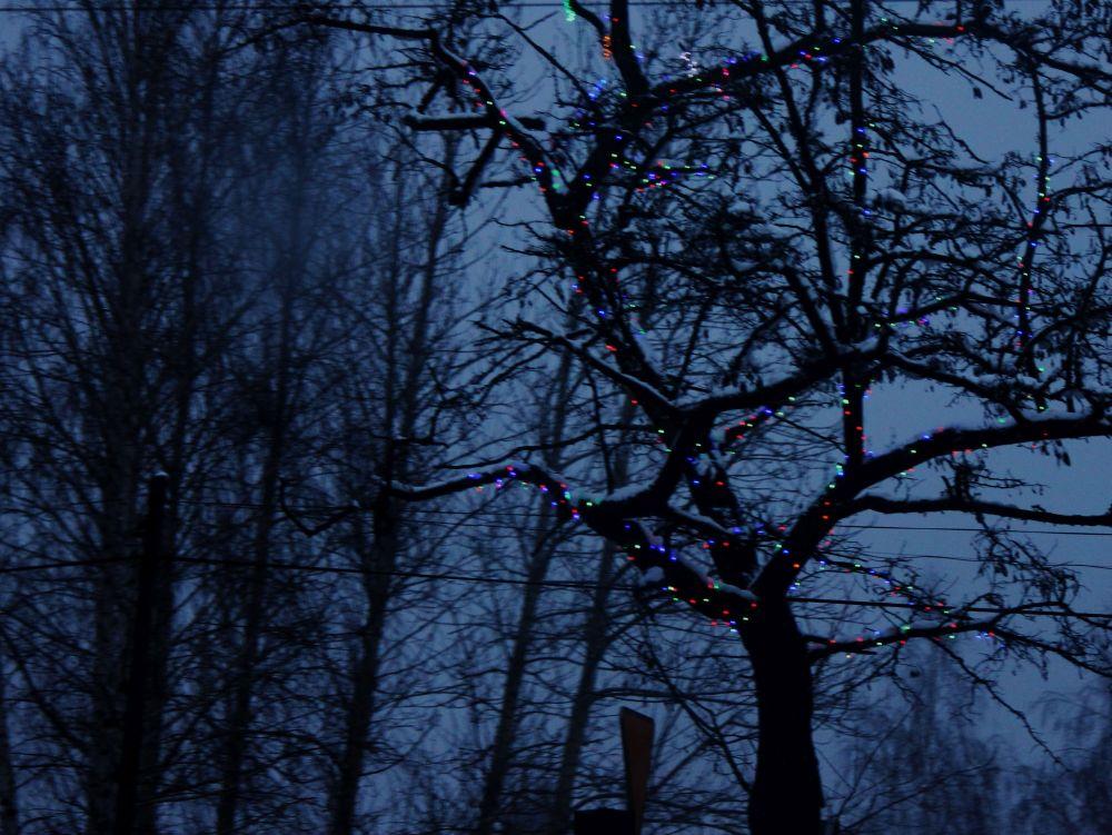 lampki_zima_drzewa_polska_zmierzch_kolorowe_mrok_czarne