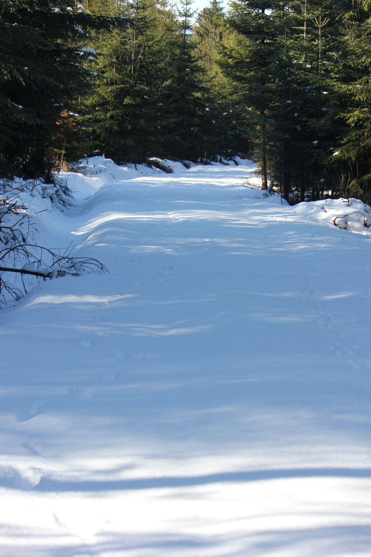 las_przyroda_iglasty_tatry_góry_zakopane_śnieg_ślady