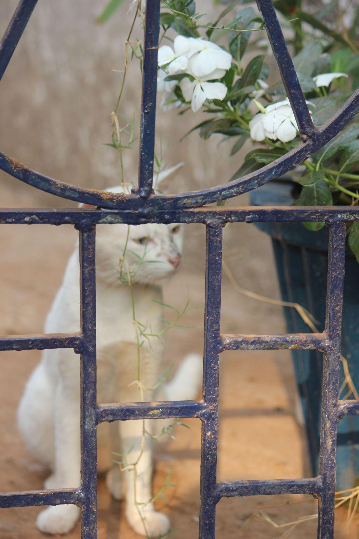 kot_biały_mały_słodki_uszy_wąsy_kwiatki_je_kwiaty_ogrodzenie
