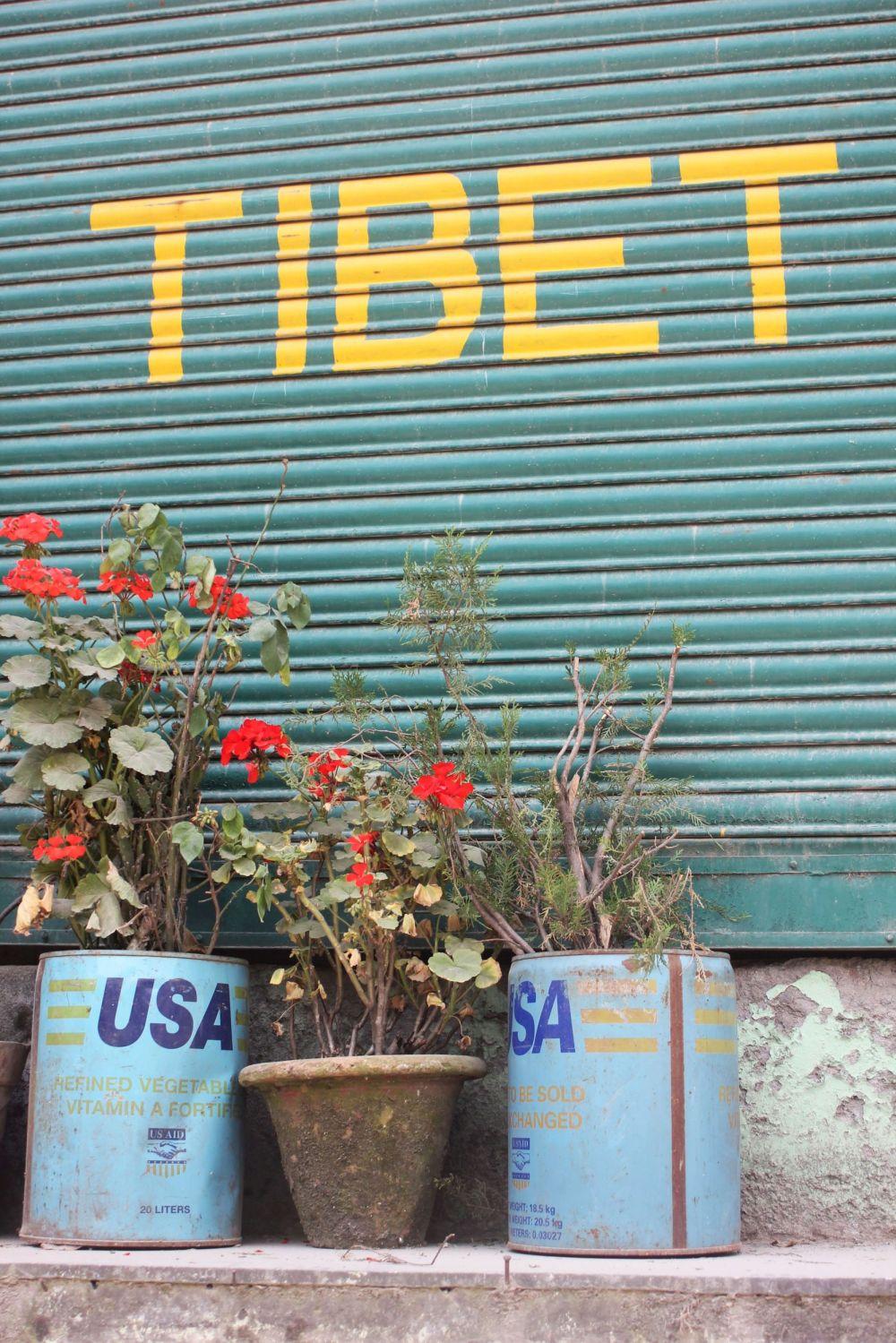 puszka_usa_tybet_kwiaty_guerilla_gardening
