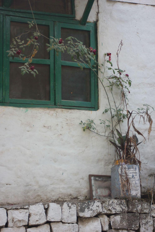 Kwiaty sadzone w puszkach butelkach i beczkach
