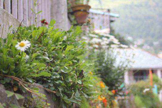 Miejskie ogrodnictwo czyli guerilla gardening