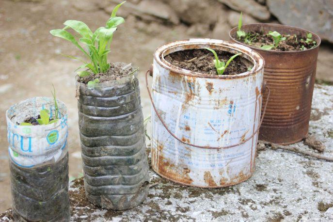 sadzonki_kwiaty_w_butelce_plastikowej_puszce_pomysły_na_ogród_guerilla_gardening