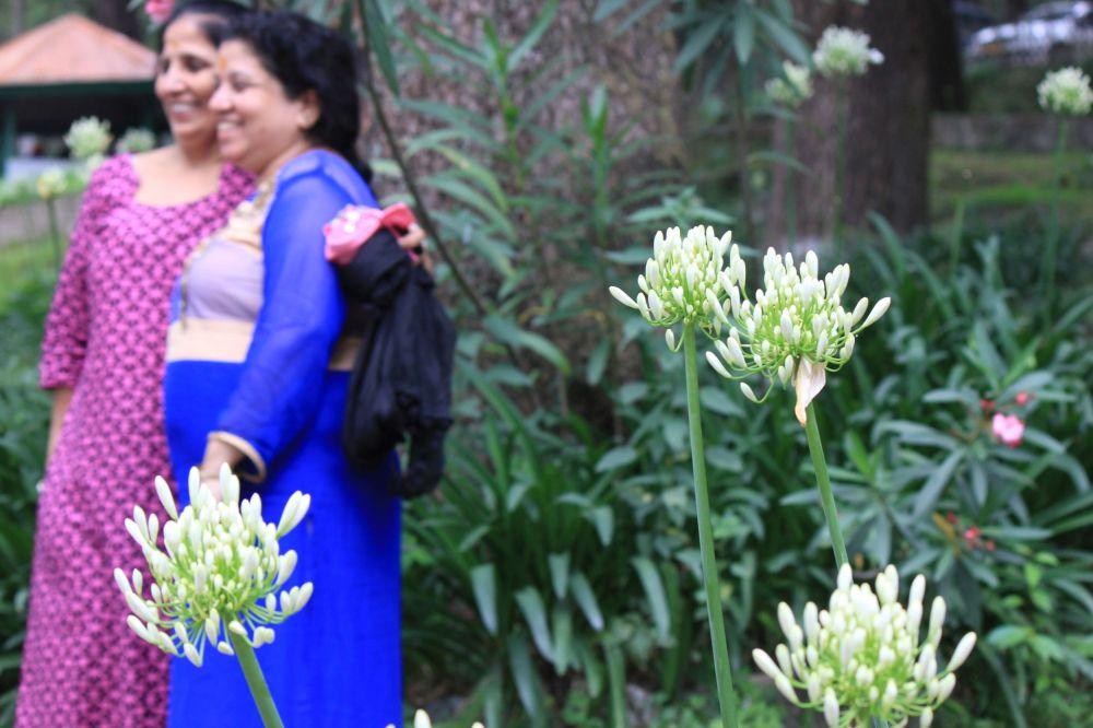 kwiaty_hinduska_sari_indie_dharamsala