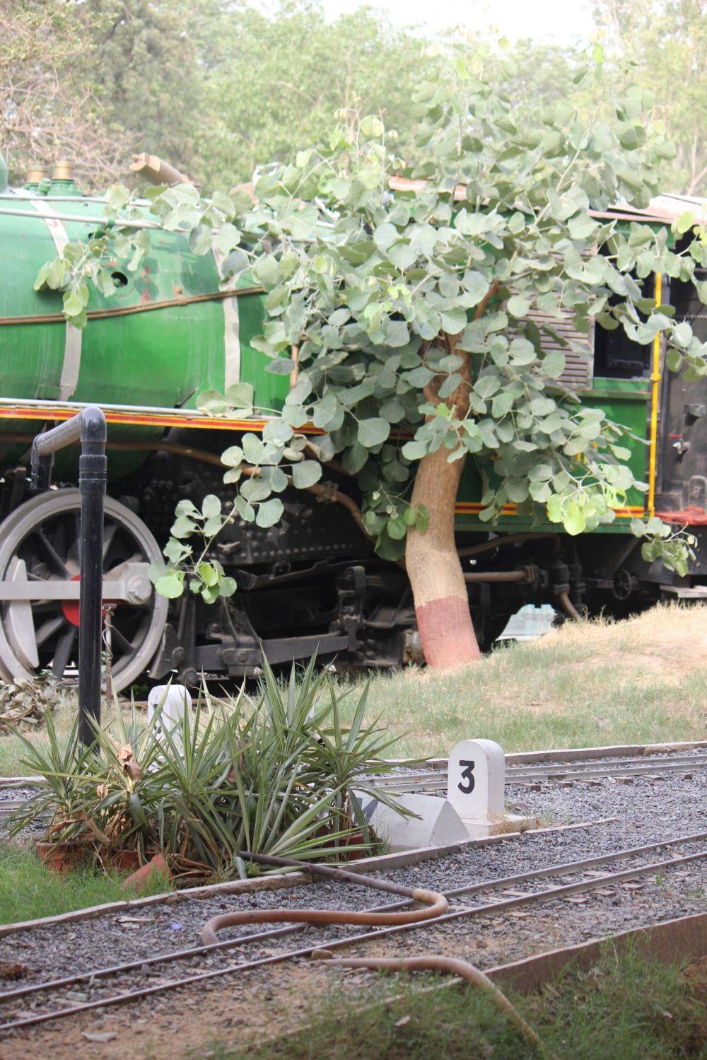 zielony_pociąg_kolej_drzewo_parowóz