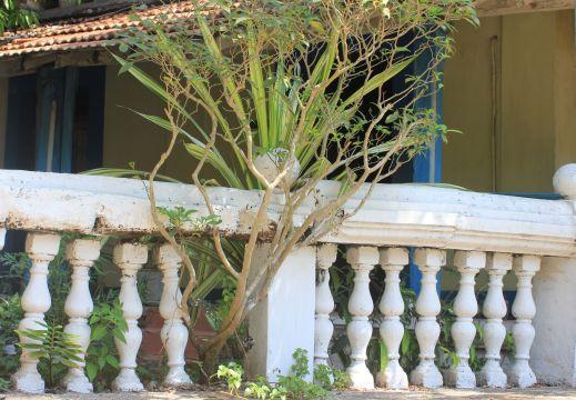 ogród_willa_goa_portugalia_hacjenda_ogrodzenie_drzewo