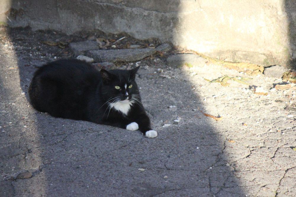 czarno_biały_kot_białe_łapy