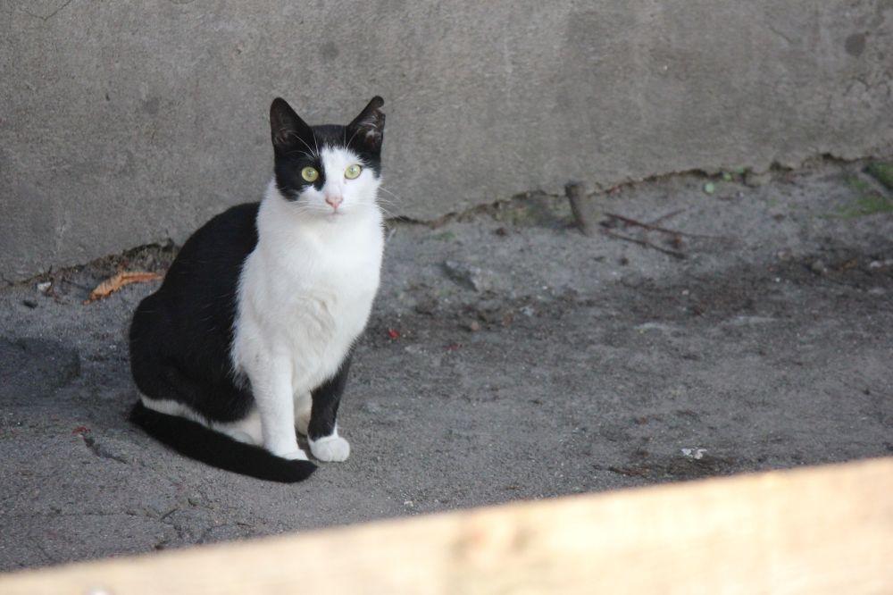 kot_w_łaty_czarno_biały