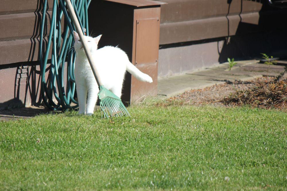 kot_biały_ogród_ocieranie_się