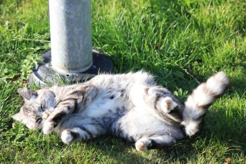 kot_leży_chce_się_bawić_koci_brzuch_słodki_kotek