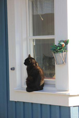 kot_w_oknie_na_parapecie_czarny_kot