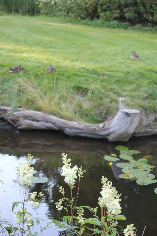 hobbiton_shire_kaczki_konar_nenufary_jeziorko_jezioro_przyroda