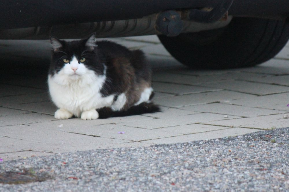 zły_kot_groźny_ivan_terrible_iwan_groźny_angry_cat