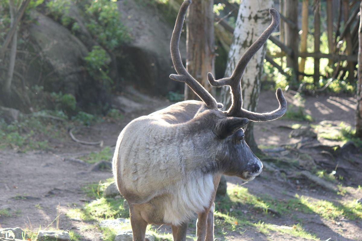 Zwierzęta żyjące w Szwecji