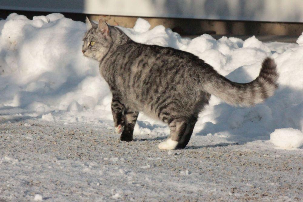 kot_zimą_zimowe_futro_śnieg_na_zewnątrz