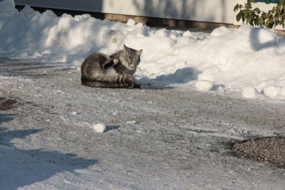 kot_bawi_się_na_śniegu