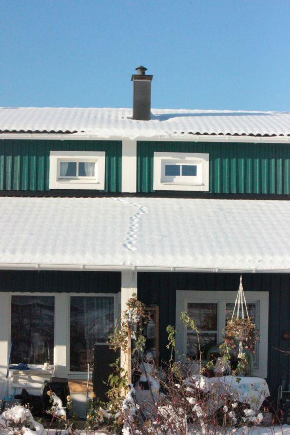 szwecja dom ślady kota na dachu zima