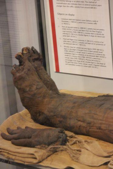 mummy mumia muzeum odcięta ręka stary trup gnijące ciało mumie egipskie