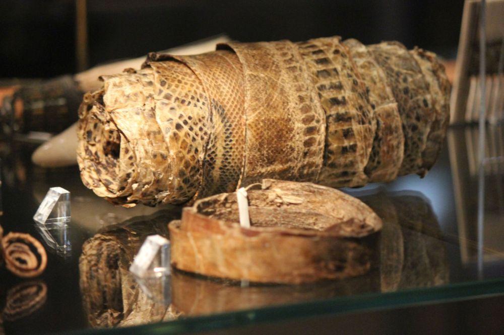 skóra węża rolka skóry węża skóra ludzka pasek z ludzkiej skóry pas ze skóry człowieka