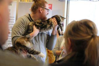 kot na wystawie trzymanie właściciel