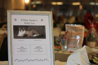 dyplom dla kota wystawa konkurs