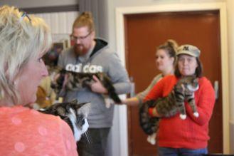 koty wystawa