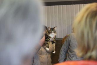koty wystawa dłygowłose norweskie