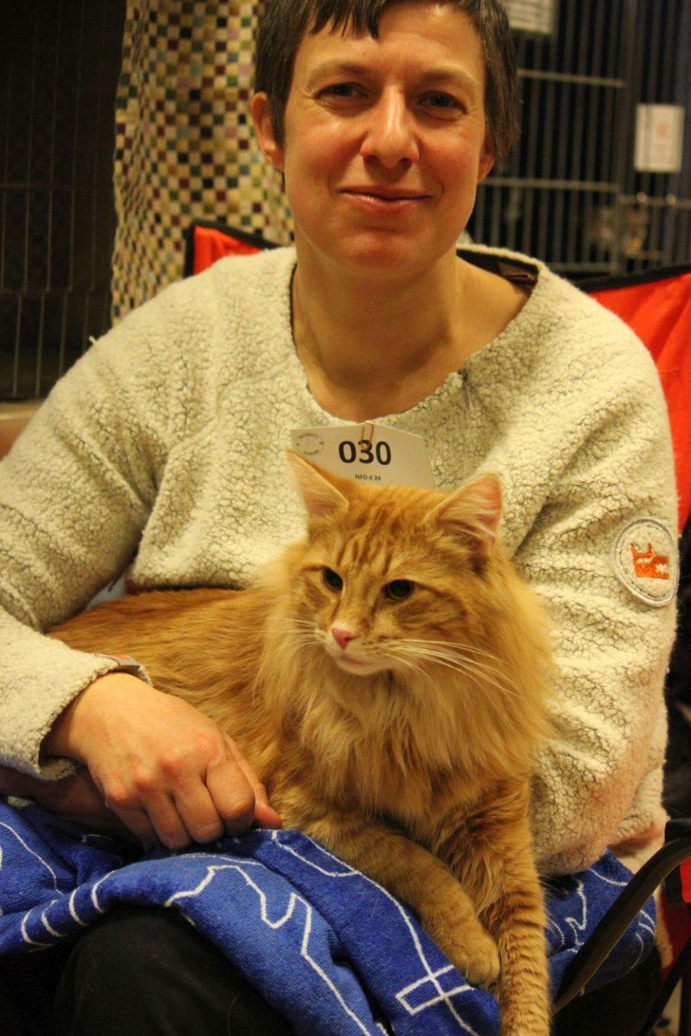rydy kot z właścicielką na kolanach