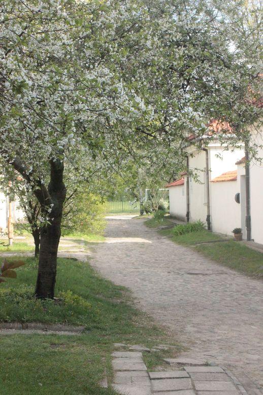 urokliwa aleja wśród starych domów jabłonie kwitnące domki odosobnień domek pustelnika