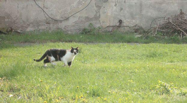 kot w klasztorze na łące dewajtis kamedułów