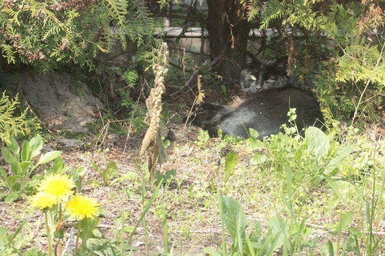 czarny kot odpoczywa koty wiosną