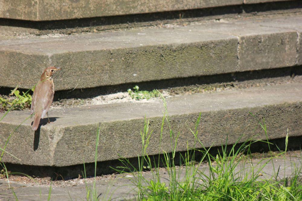 gatunki ptaków szary brązowy ptak z dziobem