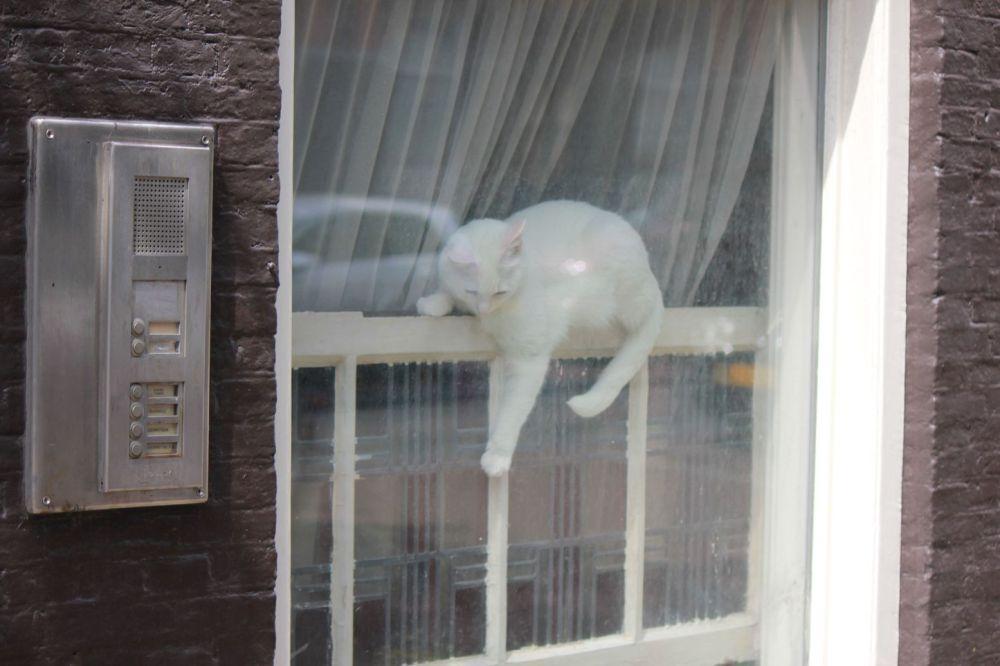 biały kot siezi okrakiem
