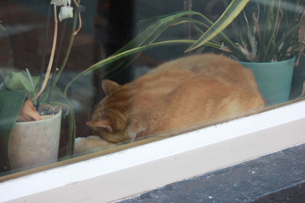 rudy kot śpi