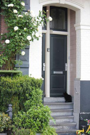 kot schody amsterdam dom