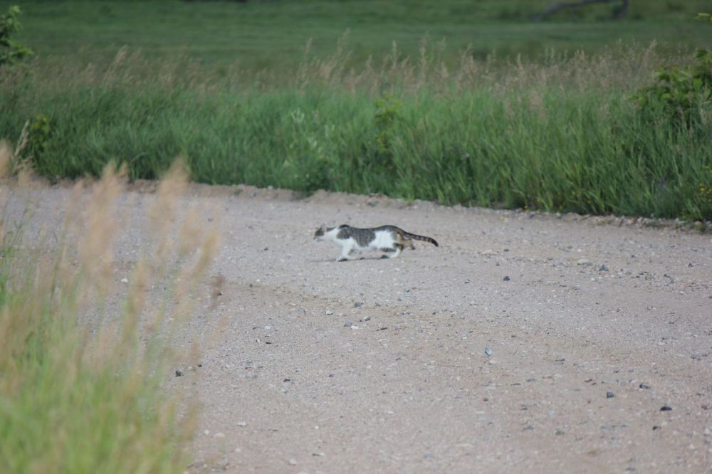 droga żużel kamienie kot podlasie pod gródkiem