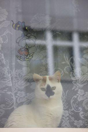 kot za szybą firanka biały