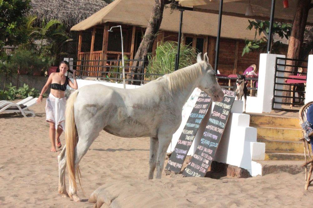 biały_koń_na_plaży_czyta_ceny__wchodzi_do_restauracji
