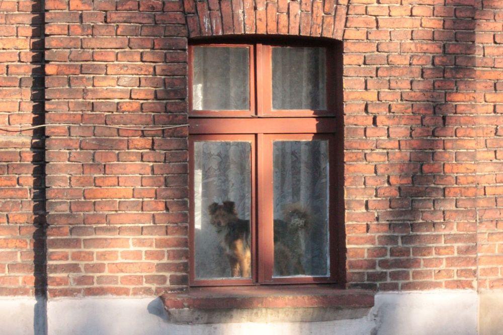 familoki osiedle księży młyn domy pofabryczne mieszkania